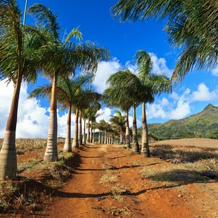 Palm trees growing along the road