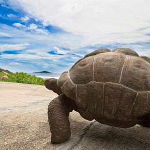 Meet the Friendly Tortoises of the Seychelles