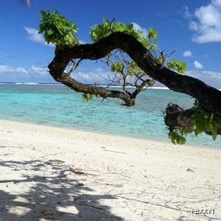 Tree doing shade on the beach