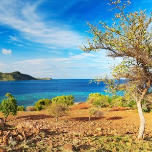 Komodo photo 6