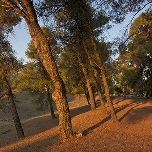 Epidavros photo 7