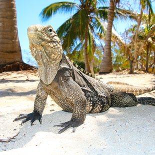 Mayaguana photo 11