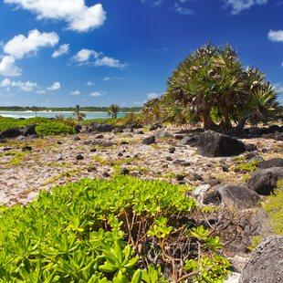Tropical plants on the island