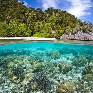 Papua New Guinea photo 30
