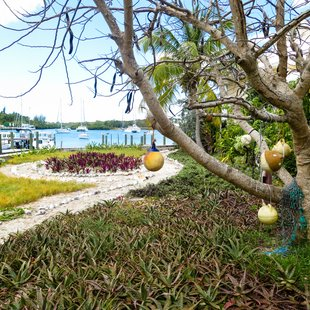 Abacos Islands photo 6