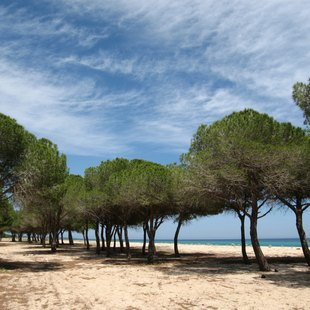 Explore the Forests of Sardinia