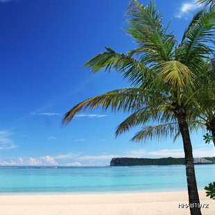 Heavenly beach with palm trees