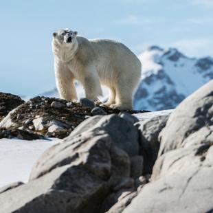 Greenland photo 28