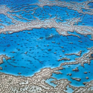 Great Barrier Reef photo 29