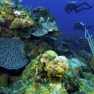 Divers explore the seabed surrounding Cuba