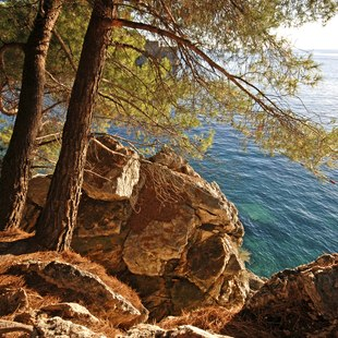 Explore the Peaceful Forests of Montenegro