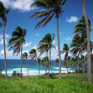 Palm trees over bay