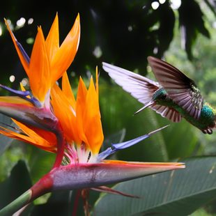 Costa Rica photo 17