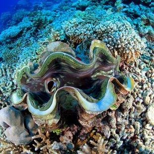 Samoa photo 4