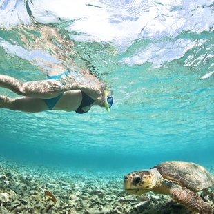 Diving woman and turtle