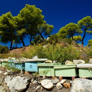 Saronic Islands photo 15
