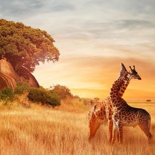 Tanzania photo 21