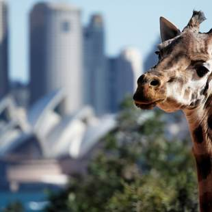 Sydney photo 10