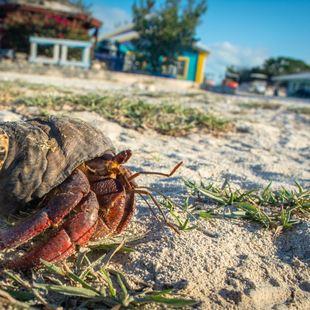 Mayaguana photo 12