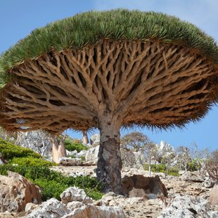 Socotra photo 6