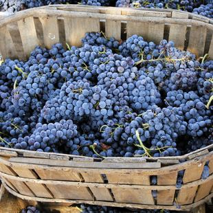 Tour vineyards for exclusive wine tasting
