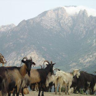 The Mountains of Ajaccio
