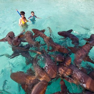 Feed Sharks in the Bahamas