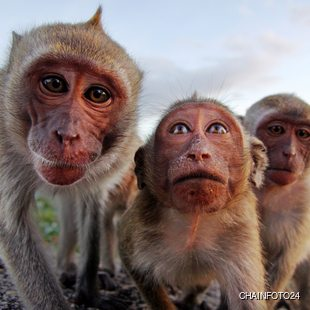 Monkeys posing for a photo