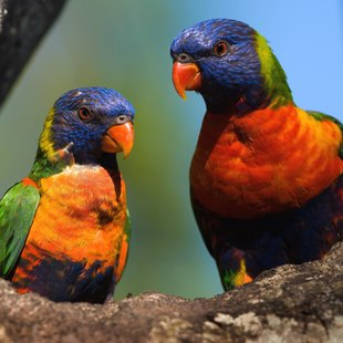 Solomon Islands photo 12