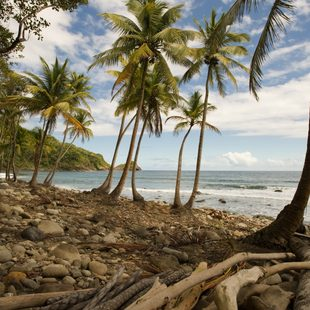 Palm trees and wood on the isolated, tropical coast