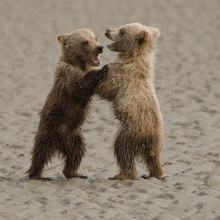 Alaska photo 16