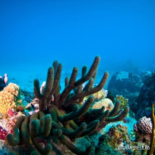 Beautiful colourful coral reef