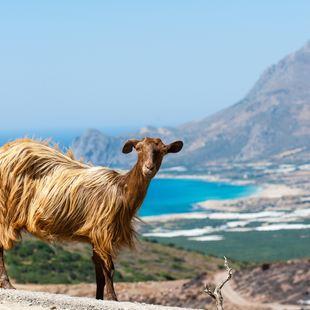 Crete photo 15