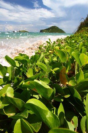 St. Lucia photo 16