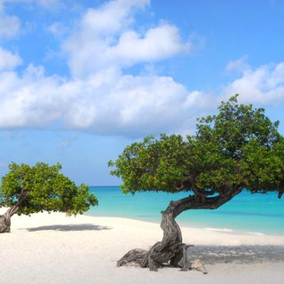 Trees on the empty white beach