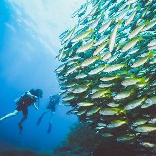 Phi Phi Islands photo 10