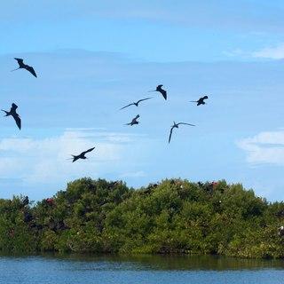 Barbuda photo 10