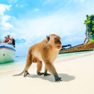 Phi Phi Islands photo 4