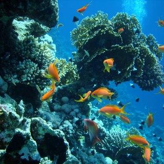 French Polynesia photo 4