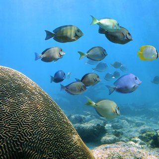 Coral reef and fishes in the background