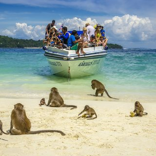 Phi Phi Islands photo 13