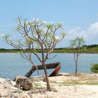 Barbuda photo 8
