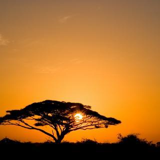 Africa photo 6