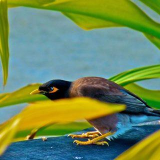 Bird among green