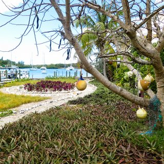 Abacos Islands photo 7