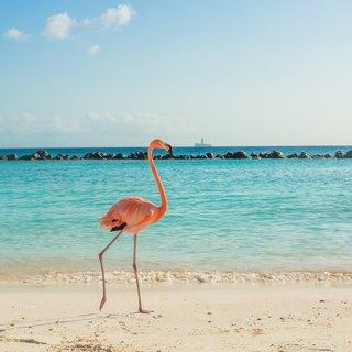 Anegada Island photo 2