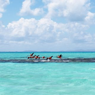 Anegada Island photo 7