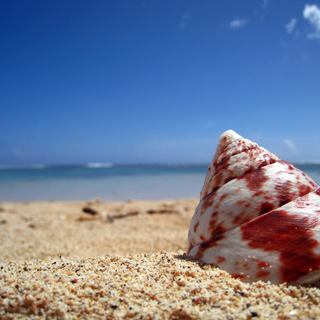 A seashell ejected on the beach by the sea