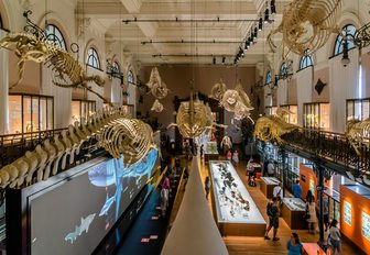 hall in oceanographic museum of monaco with skeletons on ceilings and exhibitions