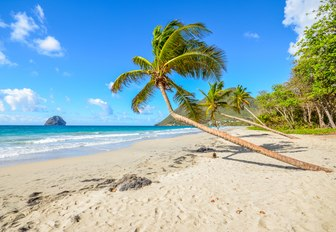 white sand beach with palm trees and blue surf in Martinique